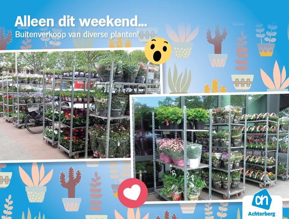Alleen dit weekend: buitenverkoop van diverse planten!